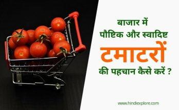 Real Tomato Buy