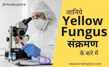 yellow fungus in india