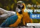 Birds Facts